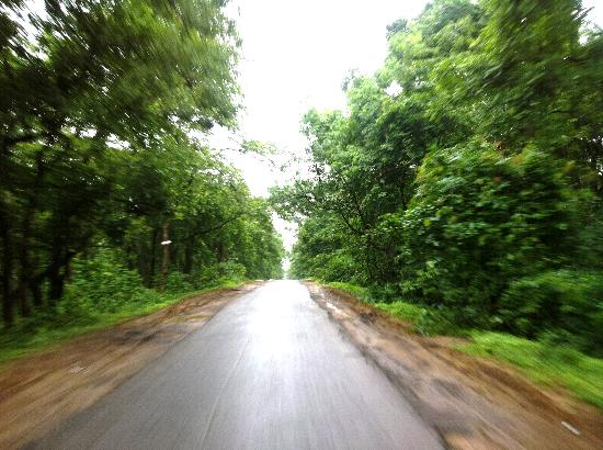 Road in Eturnagaram Forest