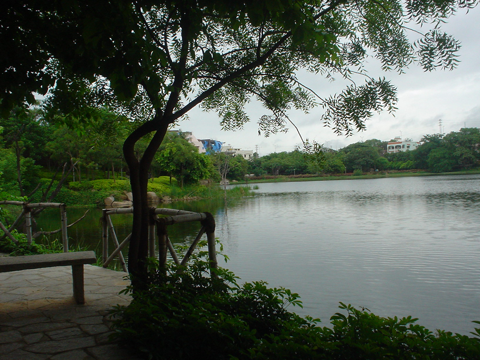 Lotus Pond_Parks in Hyderabad