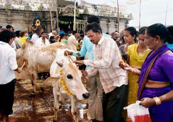 Devotees Performing Kode Mokku at Sri Rajarajeshwara Swamy temple Vemulawada