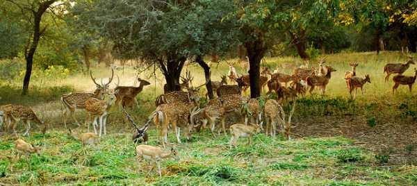 Mahavir Harina Vanasthali National Park Hyderabad
